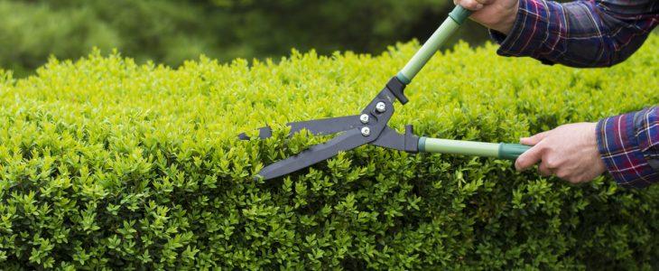precio arreglar jardín